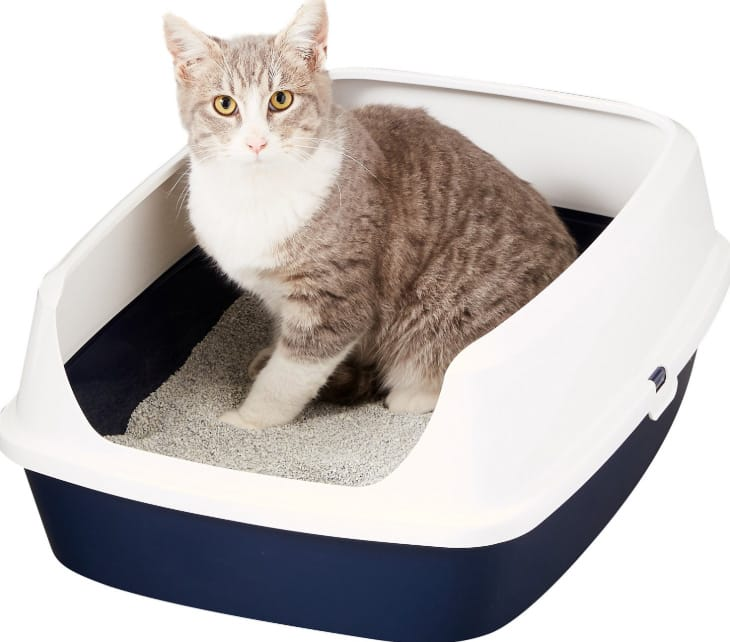 Merk Pasir Kucing Terbaik